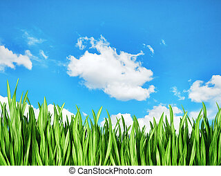 grass - green grass isolated on a sky background