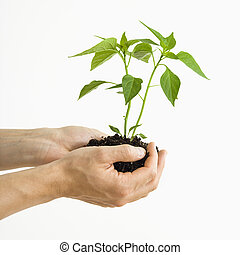 Hands holding plant. - Man\'s hand standing holding growing...