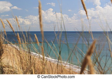 Coast through Seagrass - A view of the coast through...