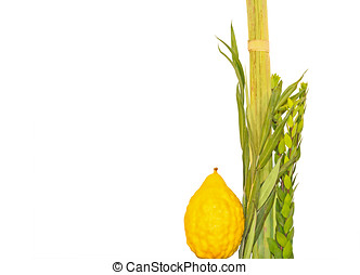 Jewish holiday Sukkot lulav and esrog - Objects used for...