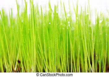 Gras, Wiese - grne Wiese mit weiem Hintergrund als...