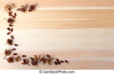 Beech nuts and empty nut shells, half border on wood - Beech...
