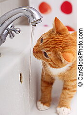 Animals at home red cat pet kitty drinking water in bathroom...