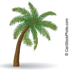 palm tree - Coconut palm tree on a white background