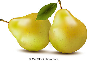 Fresh pears isolated on white. Vector