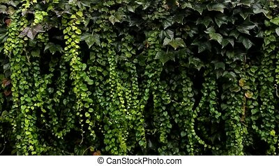 green nature background - flora green nature background wall