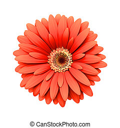 Red daisy flower isolated - 3d render - Red daisy flower...
