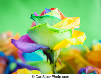 multi-colored roses - bouquet of multi-colored roses Rainbow...