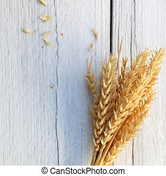 Sheaf of golden wheat on a background of white painted rough...
