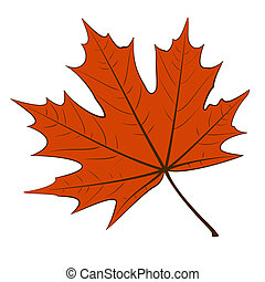 Red Maple Leaf - Red maple leaf on a white background. EPS10...
