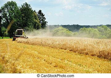 grain harvest on field - tractor removes grain harvest on...