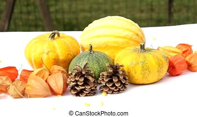 colorful pumpkins and maple leaves