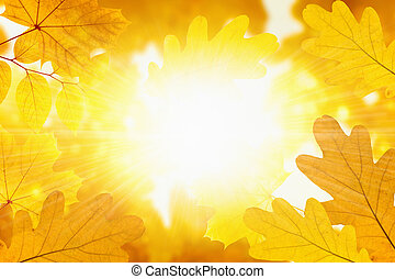 Fall background - Beautiful nature background - yellow maple...