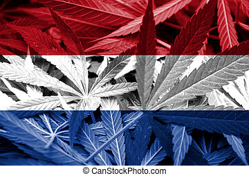 Netherlands Flag on cannabis background. Drug policy....