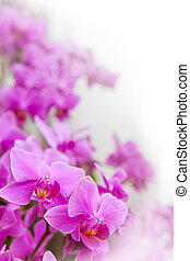 beautiful of tropical orchid flower blooming show shallow...