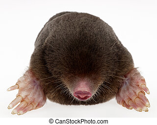 mole - animal fur on white background