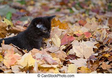 Cute kitten in leaves