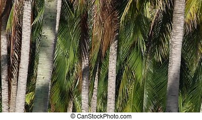 Coconut Plantation 1 - View of a part from coconut...