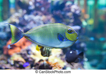 tropical world - tropical fish - photo taken from oceanarium