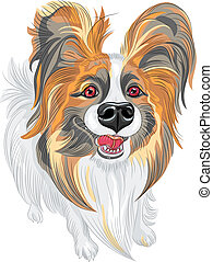 vector pedigreed dog Papillon breed - cute smiling Papillon...