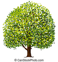 Tree Drawing - Illustration of tree with green leaves...