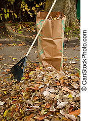 Bagging fall Leaves - Working in yard raking fall leaves