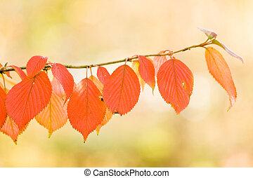 秋, さくらんぼ, 葉, 木