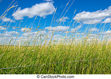 Green field on a farm under blue sky