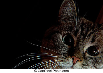 Cute gray cat on a black background with copy spase