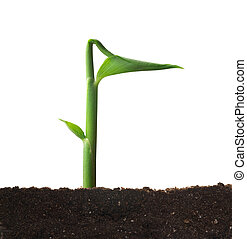 Spring sprout. - Isolated spring sprout. Conceptual nature...