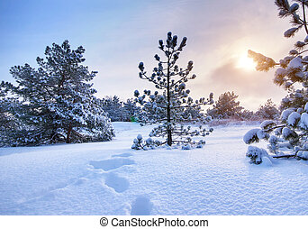 Winter landscape Composition of nature
