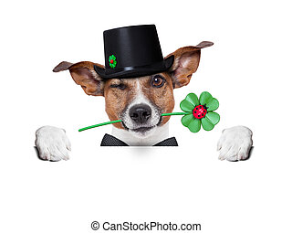 lucky dog - good luck chimney sweeper dog with hat and...