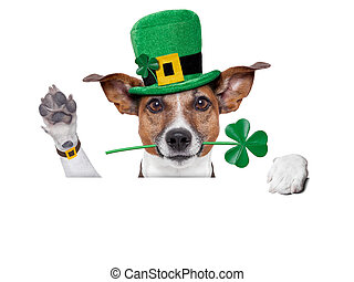 st. patrick's day dog with a clover behind a blank banner