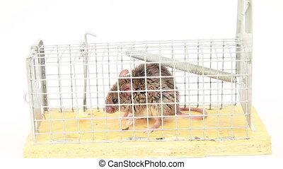 Mouse is trying to get out of the trap - Mouse in a...