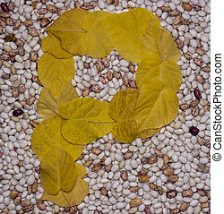 Letter P. Leaf and beans.