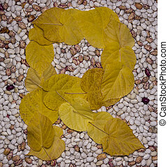 Letter R. Leaf and beans.