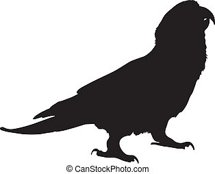 Vector graphic outline of a paradise gold capped conure