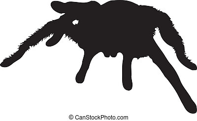 Vector graphic silhouette of a Chilean rose tarantula.