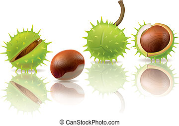 Chestnuts. Contains transparent objects. EPS10