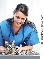 veterinario, Cuidado, lindo, gato