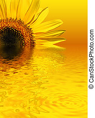 Sunflower Beauty - Sunflower with reflection over rippled...