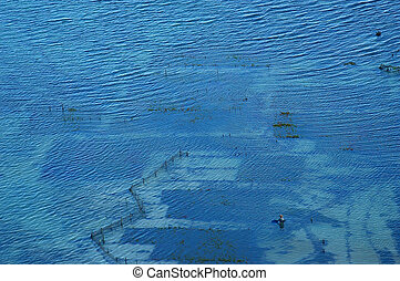 Seaweed farm, Bali - Seaweed farm in the ocean, Nusa Dua,...