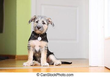 Animals at home dog pet mutt puppy sitting on floor -...