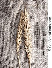Wheat on sacking background