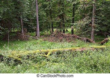 Bialowieza primeval forest - Bialowieza forest - national...