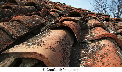Tiled roof. Close-up