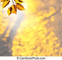 Autumn leaves - autumn leaves