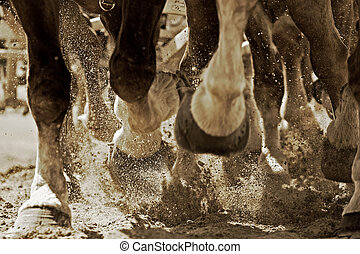 Powerful Hooves in Motion (sepia) - Closeup of the hooves of...