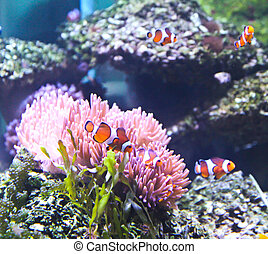 Coral Reef and Tropical Fish in an aquarium