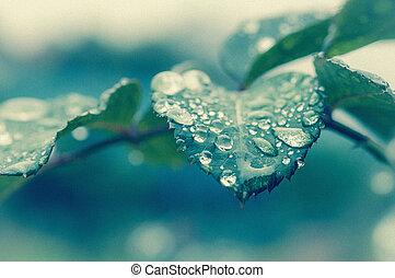 pingos chuva, folha